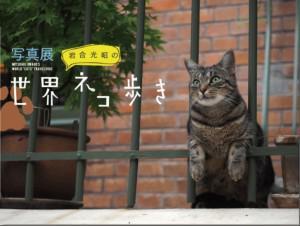『岩合光昭の世界ネコ歩き』写真展やオールカラーの写真集を発売!!の画像