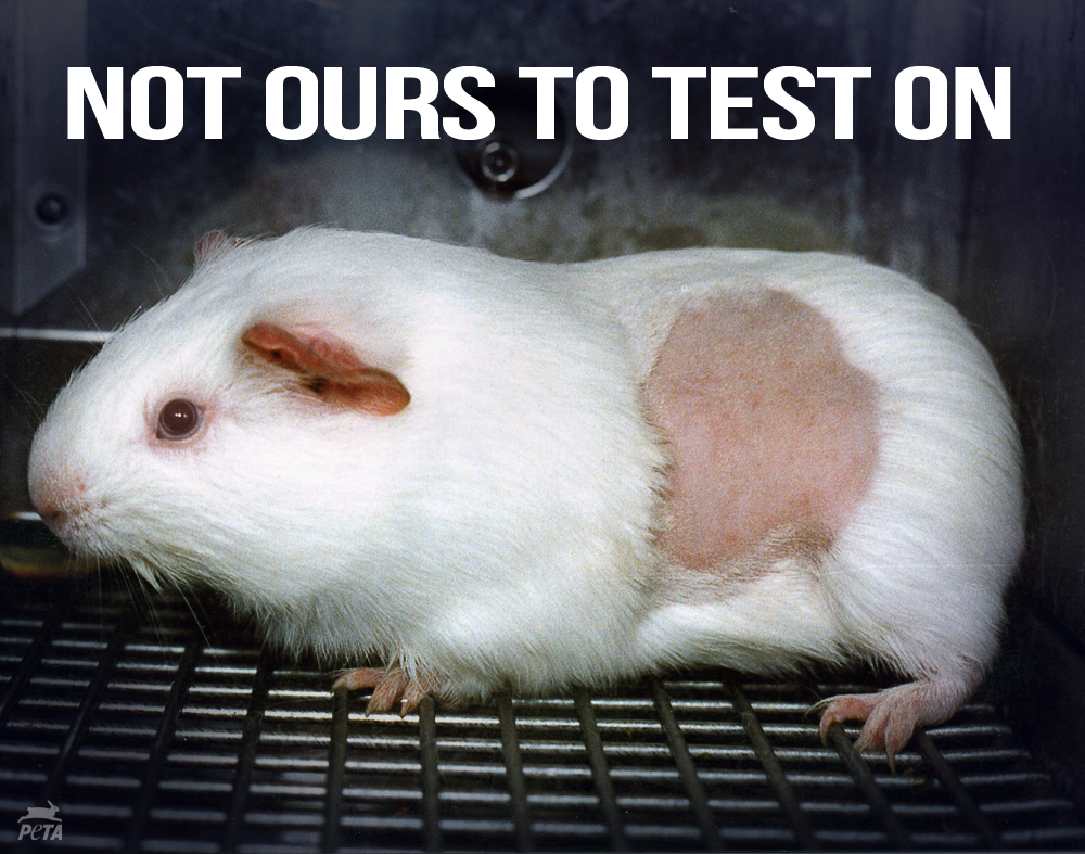 ICYMI: #Britain BANNED animal tests 4 finished household products http://t.co/qxebIAgRaX  RT if u want US to be next!