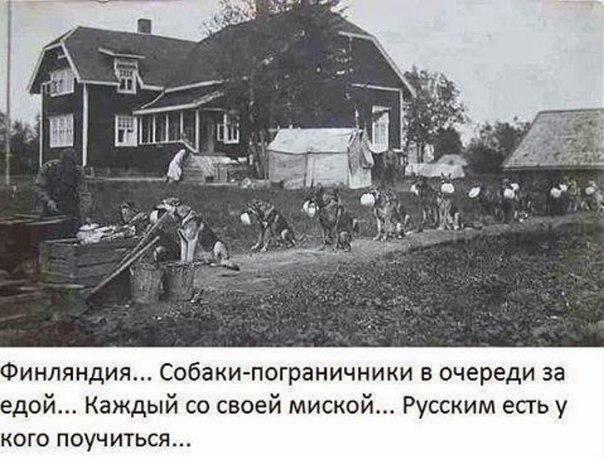 Идея Азарова нашла воплощение в России: на фестивале уличной еды посетителей кормили с лопат.  ФОТО+ ВИДЕО+ ФОТОжабы - Цензор.НЕТ 9759