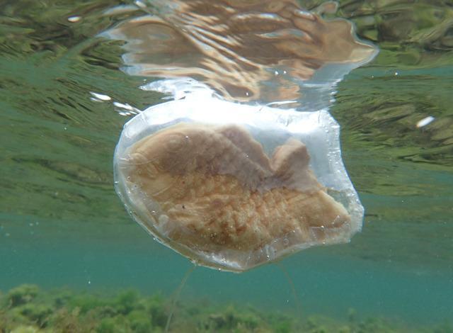 [たいやきを泳がせたい] http://t.co/Cd6l9SL6g6 たいやき用の防水ケースを作って海へ。たいやきが海のなかにいるだけで意外なインパクトがあります。そしてたいやきが少し鯛に戻ったようにも見えます。(林) http://t.co/hiwdPXzGWN