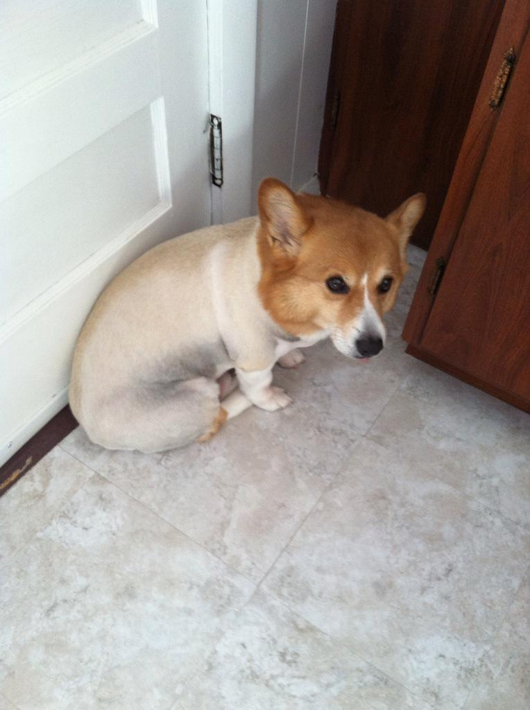 Dog fuck me