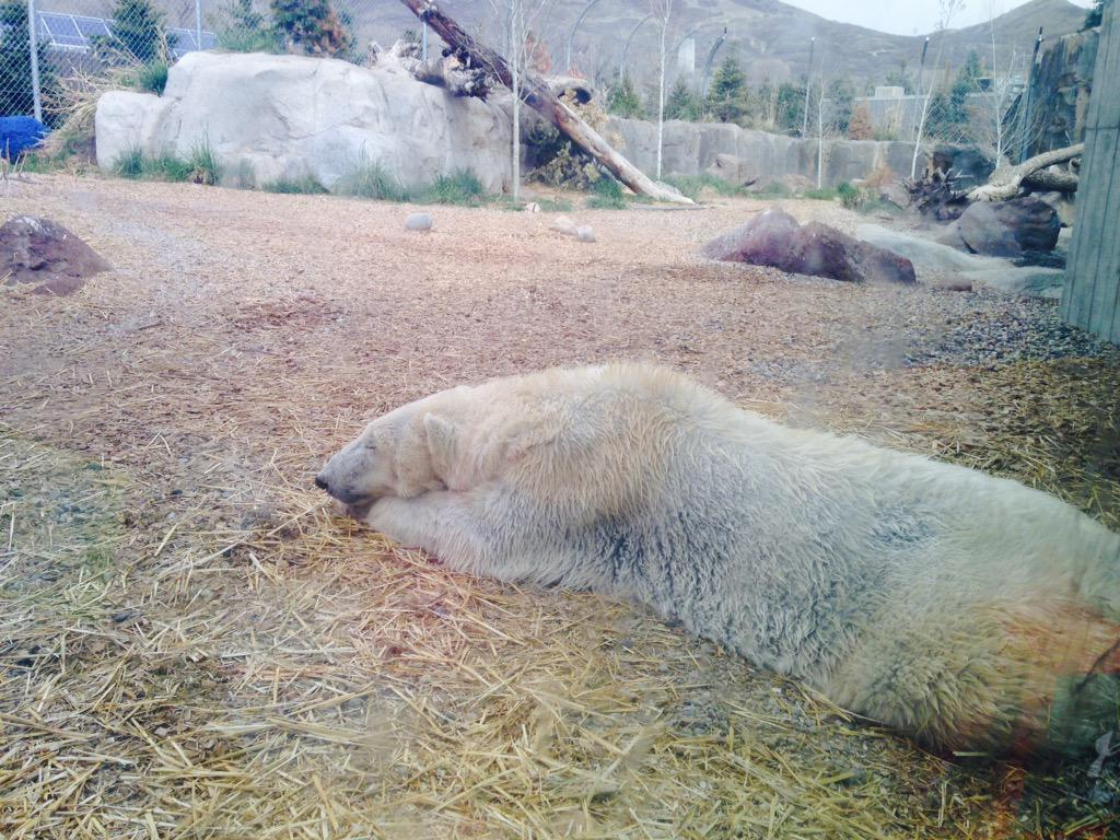 Look at this beauty😁@HogleZoo @VisitUtah #AfrikaanseMeisies http://t.co/a614XV0nYp