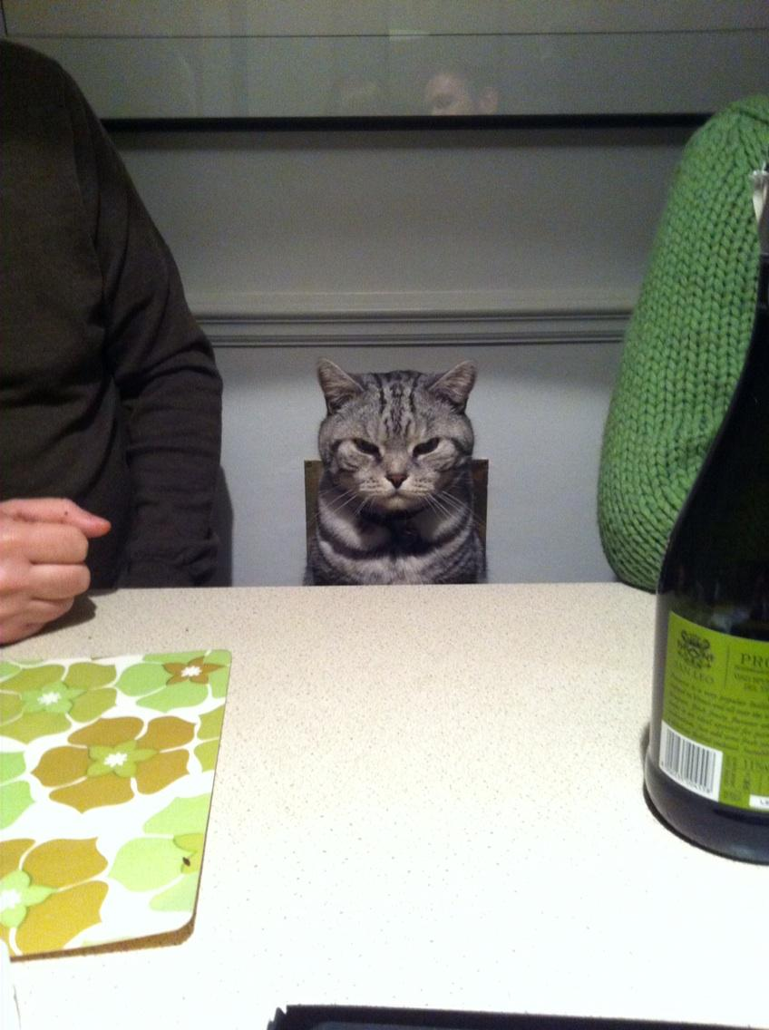My friend's cat Finnigan passed away recently. Here he is, in the best cat-at-a-dining-table picture ever taken. http://t.co/YmPR8sNFBu