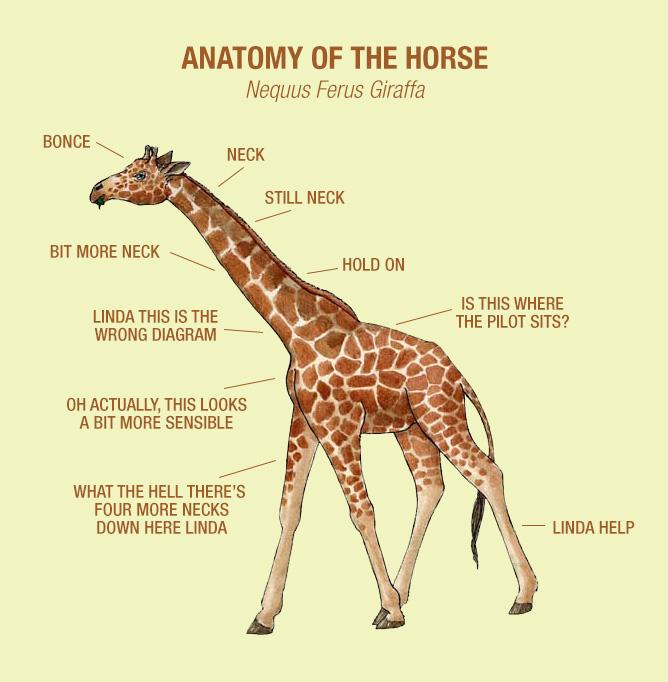 Sean Leahy On Twitter The Anatomy Of The Horse Anatomicaldiagrams