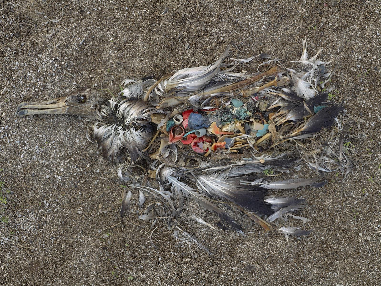 15 potentes imágenes que te concienciarán sobre lo MAL que estamos tratando al planeta | The Idealist