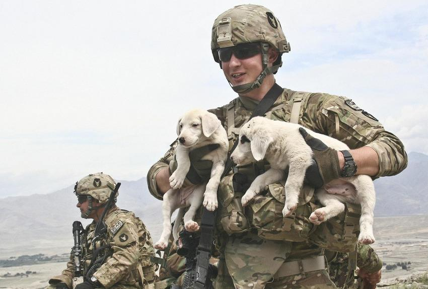 Don't look now, internet. It's #NationalPuppyDay. Here's a certified #military-puppy photo, courtesy of @USArmy. http://t.co/nbBi2D01ZM