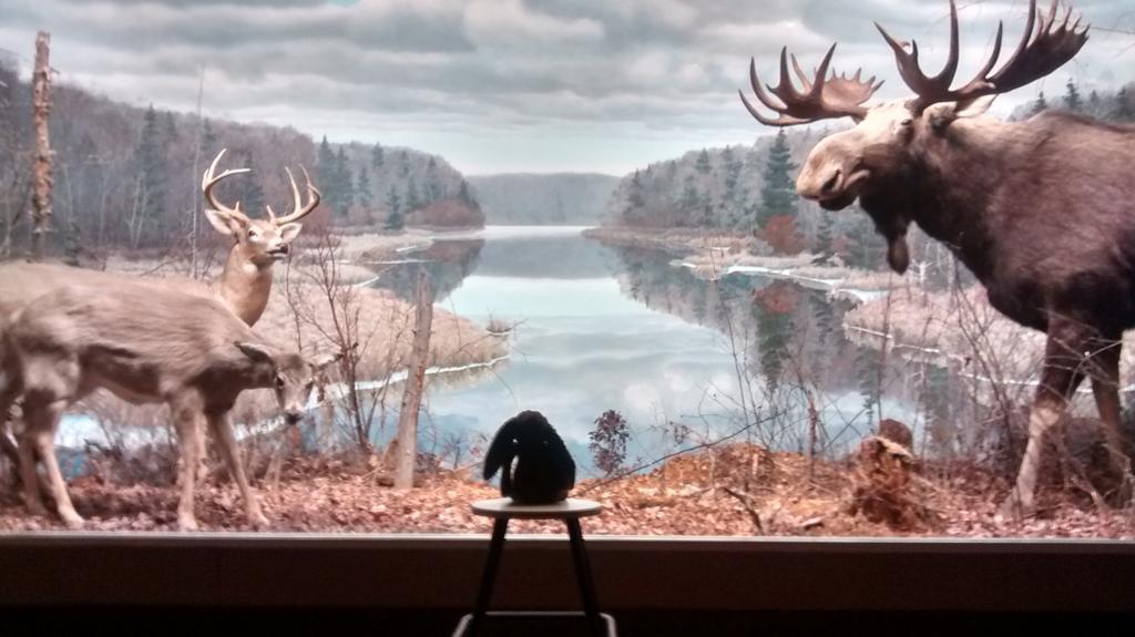A moment of quiet reflection #foundbunny #MuseumWeek #secretsMW http://t.co/gYyerXc7VG