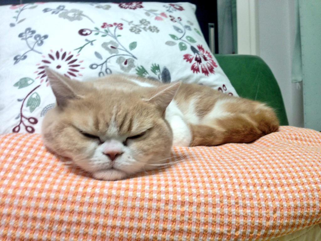 なんだろう、このアゴ…… #猫の小雪 pic.twitter.com/qBbqbrVHrY