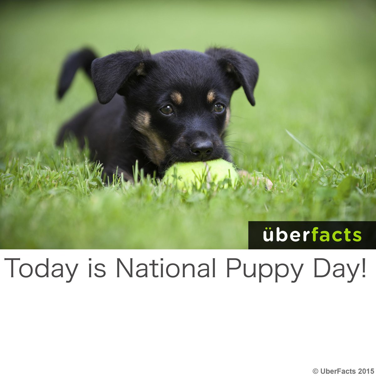 Happy #NationalPuppyDay! http://t.co/Wt6AKKh36F