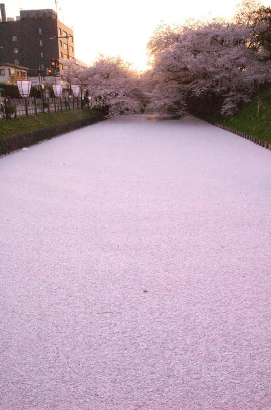 세계의 절경 'The unparalleled view in the world' 에 이 아오모리현 히로사키 성 벚꽃이 선택되고 있다고 합니다. 강이 핑크색으로 사쿠라 파워를 느낍니다.. http://t.co/sxM5CnMLLe
