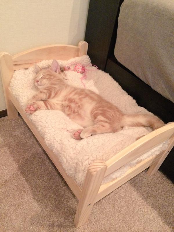 спать на кровати смешные картинки увеличении количества