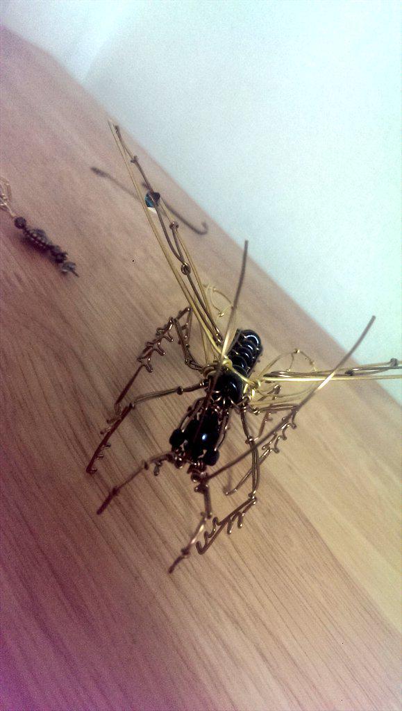 ベッコウバチ オオ 私のオススメ-ハチとアリの世界