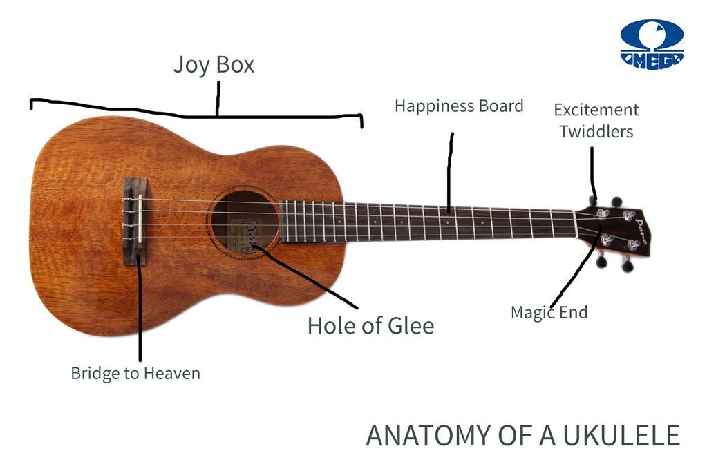 Bass Guitar Anatomy Image collections - human body anatomy