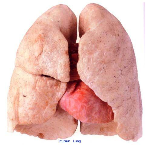 The first photo is your lungs  the second photo is your lungs after smoking
