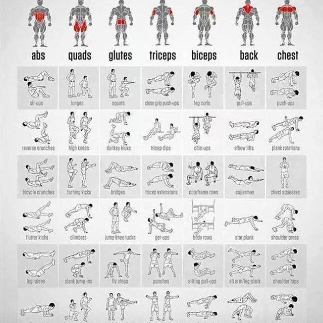 Ejercicios para los grupos musculares