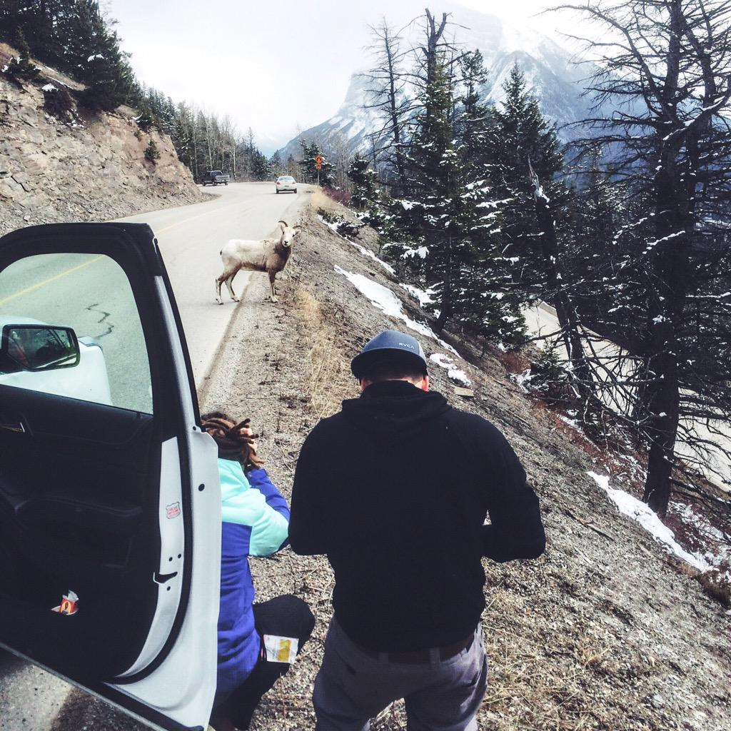 .@funforlouis & @devinsupertramp found a new friend on the road in Banff! #ExploreCanada #explorealberta