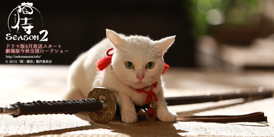 【きょうたま】皆の者、準備はよいか?明日より特番が始まるぞ。ドラマ特番・初回放送日まとめ⇒nekozamurai.info/season2/tv/ona… #猫侍 #ドラマ pic.twitter.com/ap1s4Dsze5