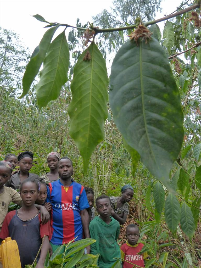 Ever had Ethiopian #coffee? Likely grown and harvested by people like this coffee farmer and family #KewEthiopia http://t.co/ZxbELtpIt7