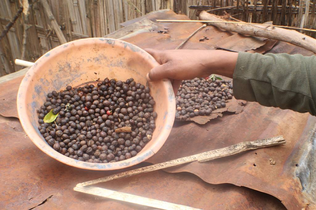 #coffee cherries sun drying nr Chenchaa. Sold and occas. traded 4 potatoes etc. coffeeleaf tea also made #KewEthiopia http://t.co/fKAkGQErnK