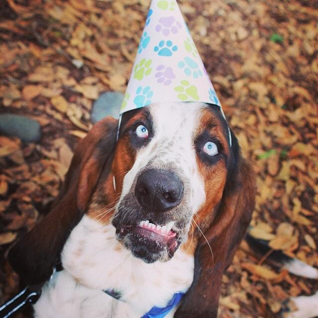 Sending a Happy 2nd Burfday to our adopted buppy Tides! We love you Tidesy!!! http://t.co/Yp5lbtttSB