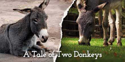 #Donkeys aren't #horses. Learn about the unique welfare challenges they face http://t.co/5MttBXtHes @DonkeySanctuary http://t.co/nJvq4g82OH