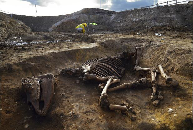 Ancient Roman horse skeleton found under hotel site at Biomedical Campus in Cambridge http://t.co/0aFu0itFvH http://t.co/NptZvrGiN6