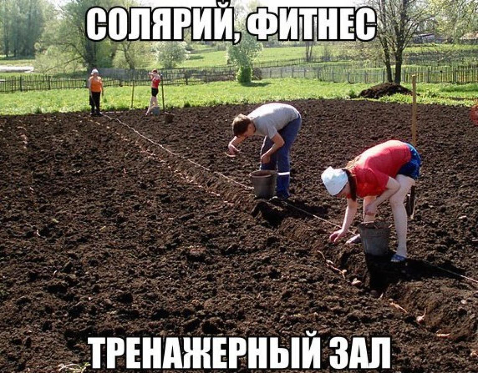 Приколы про огород в картинках