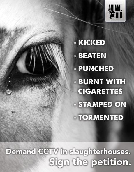 Last few days to sign the petition calling for CCTV in slaughterhouses: http://t.co/Dwbotd8kVW Please sign and share http://t.co/z326sn38dm