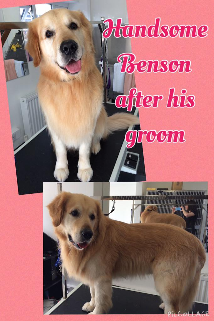 Just had beautiful Benson in for a groom, he was a very hairy boy! #knutsford #cheshire #biz4dogs check out FB page http://t.co/lG5JYg13nm