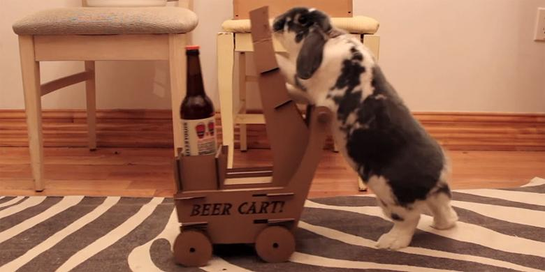 Who's Better At Fetching A Beer, A Trained Rabbit Or A Dog? http://t.co/emMNYST6xD http://t.co/bUXgk605NR