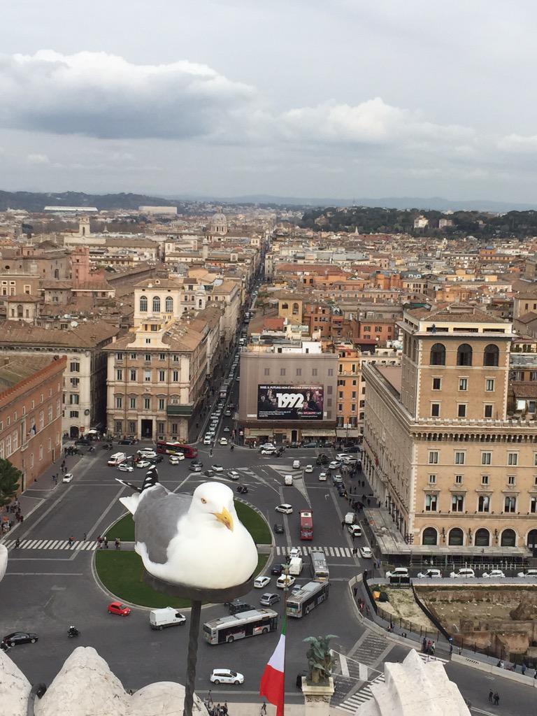 ヴェネツィア広場のヴィットリアーノで下界を眺めていたら、カモメが人をおちょくったようにチョコンと台座みたいなのに座っていた。まるで騙し絵みたいなショット。 http://t.co/cR36KK0o9n