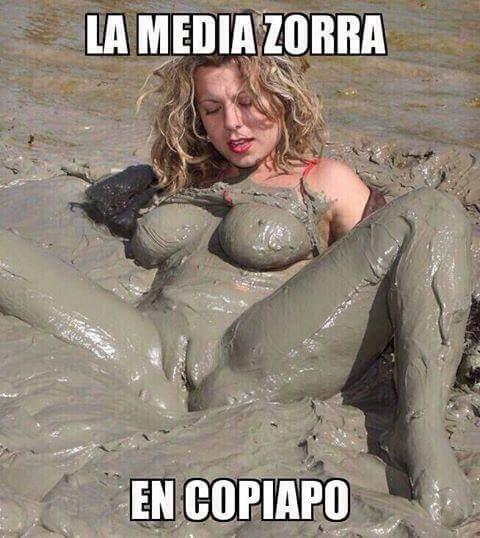 media zorra
