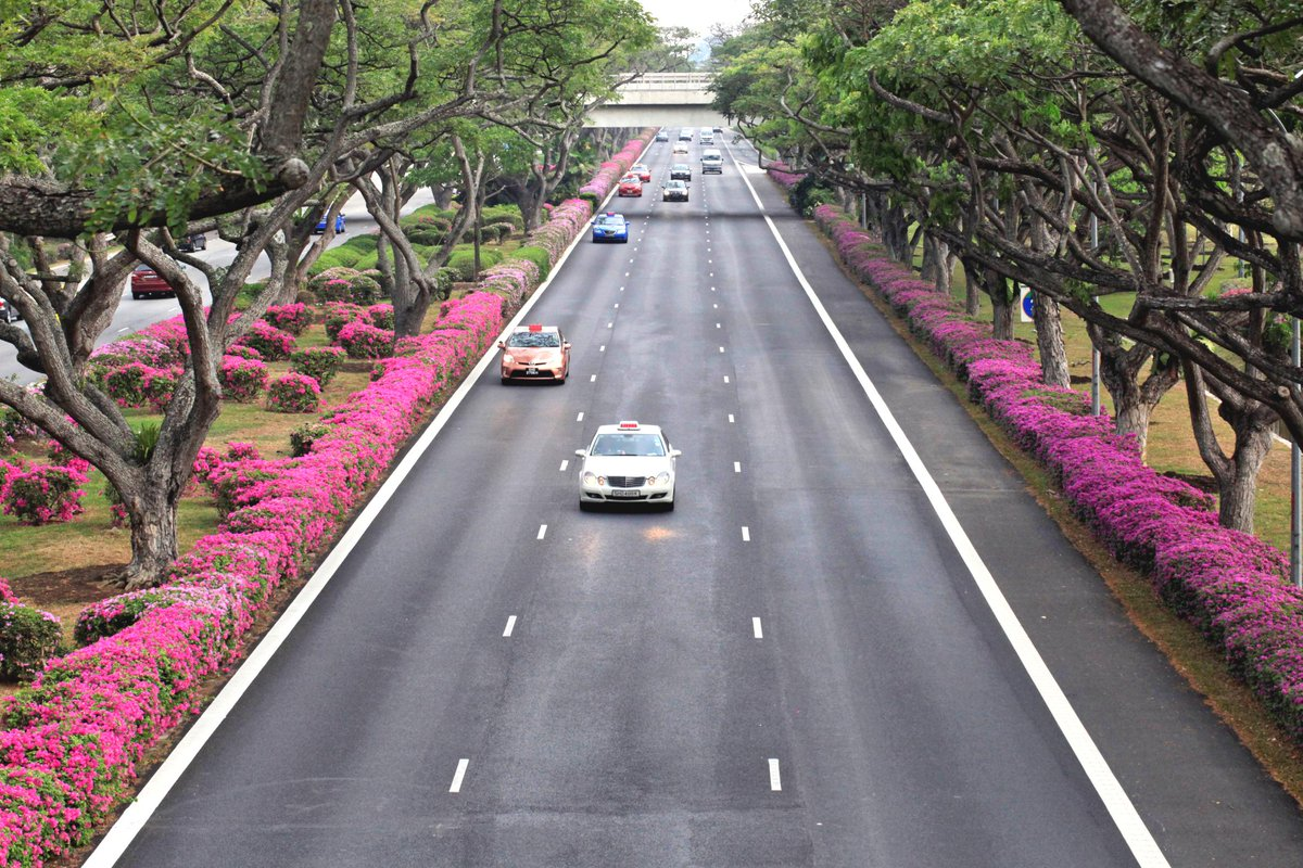 Singapore Blooms – the trees and shrubs' final salute to Mr Lee Kuan Yew, our Chief Gardener. http://t.co/rqf2eELH7B http://t.co/rRMXaztHWU