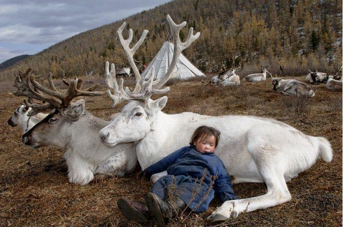 Absolutely stunning photography of Mongolian reindeer-herding tribe. http://t.co/mo4brNp2JQ @shareably http://t.co/OpMP8aTlzI