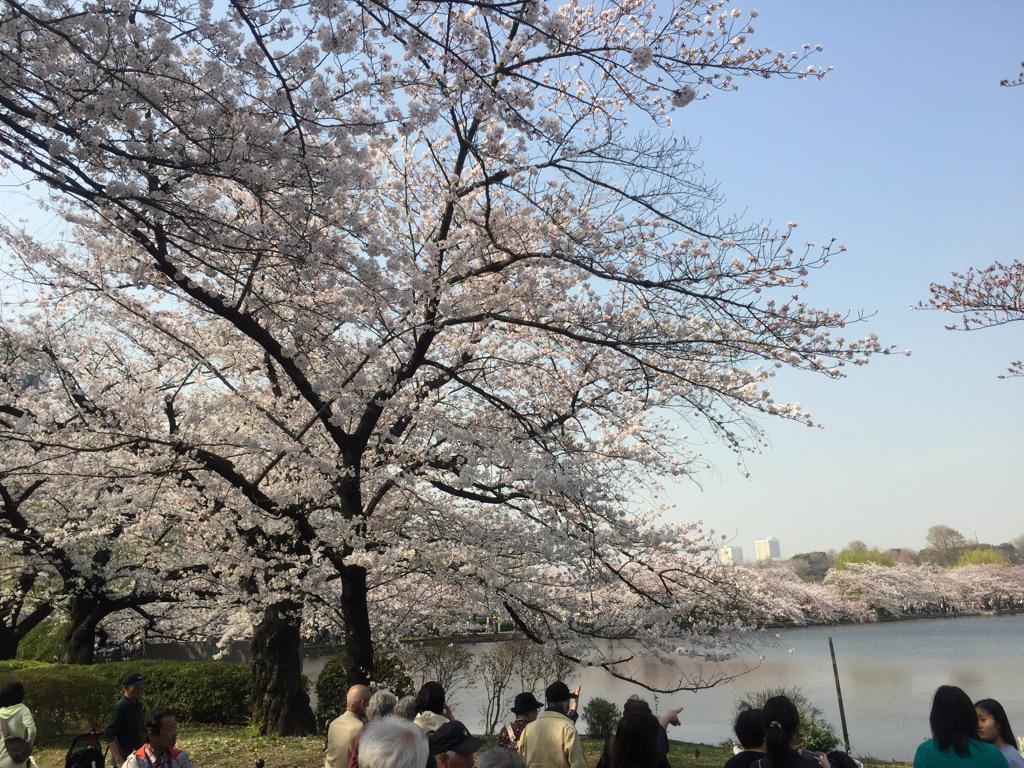 満開の桜をめでる暇もなし  上野不忍池、月曜の昼間から人大杉 (・Д・)ノ http://t.co/sz67CBggk9