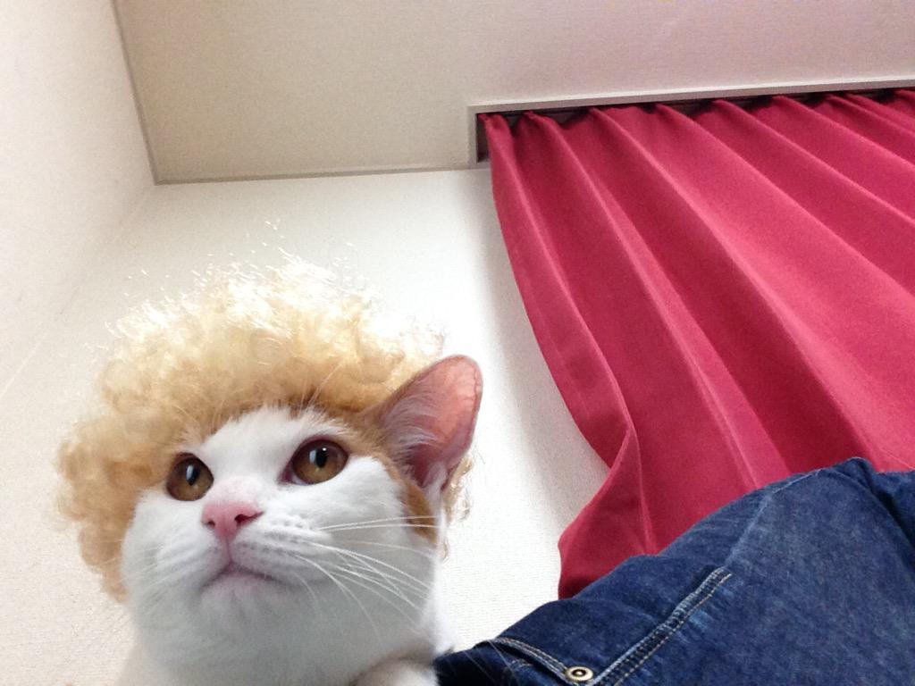 猫+かぶりもの! Twitterの「猫かぶり」画像が超絶カワイイ♪