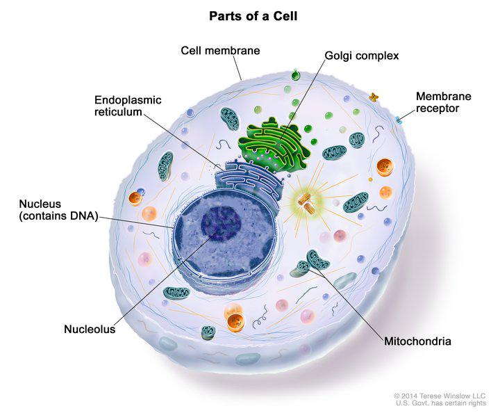 How are cancer cells different from normal cells? In lots of ways, as we explain: http://t.co/SbF8quU3ZJ #CancerFilm http://t.co/T8yELUf22c