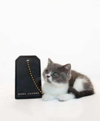 An XL dog tag & an XS kitten, shown for scale. New Marc Jacobs SS15 bags available now here: http://t.co/iReDlZ9HqJ http://t.co/Tr8JUHscmQ