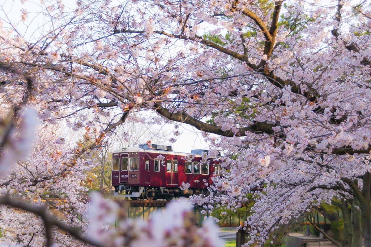 今朝も夙川に行ってきました。苦楽園口駅からすぐの定番スポットから。 #阪急沿線さくら http://t.co/auYkFziycd