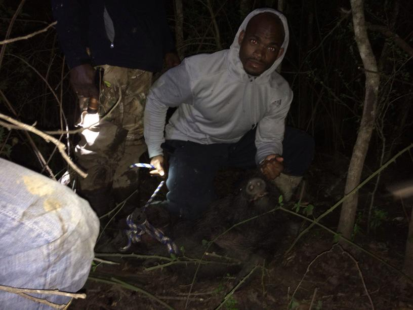 Adrian Peterson On Twitter Hog Hunting With The Fellas Takes A To Catch Seen One About 250 Now Thats We Want