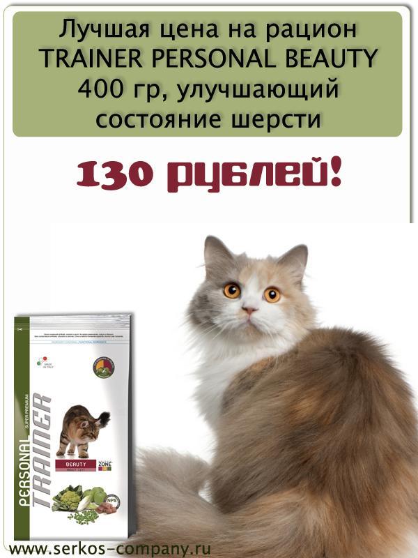 Диета Для Кошек Дешево. Как кормить кошку недорого, но качественно: рецепты, список вредных продуктов