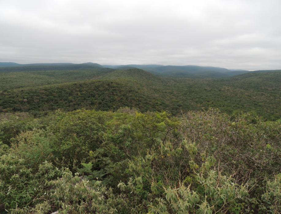 El Gran Chaco Americano es el mayor bosque seco continuo del mundo después de la Amazonía. #ChacoVivo http://t.co/vbQPxOZVdf