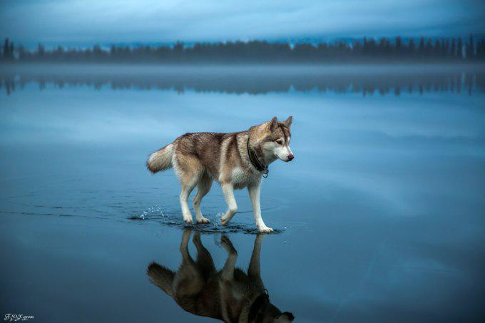"And I will..""@xeni: Enjoy these beautiful photos of huskies walkinga frozen lake in Russia.  http://t.co/NVgsQs3iIw http://t.co/GBIhwV2Nh4"""