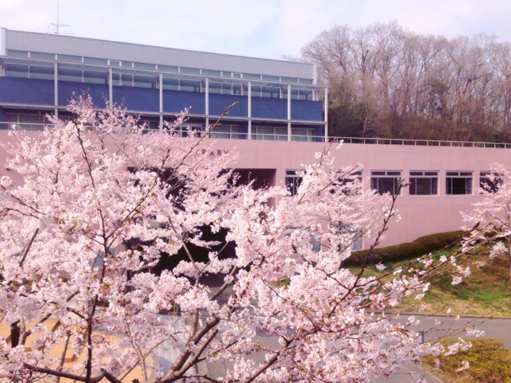 東京造形大学の桜も咲いてるよーっ!!