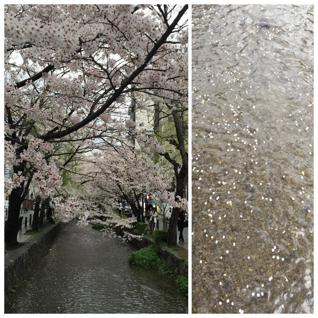 高瀬川綺麗♪ http://t.co/zp8THmQRrE