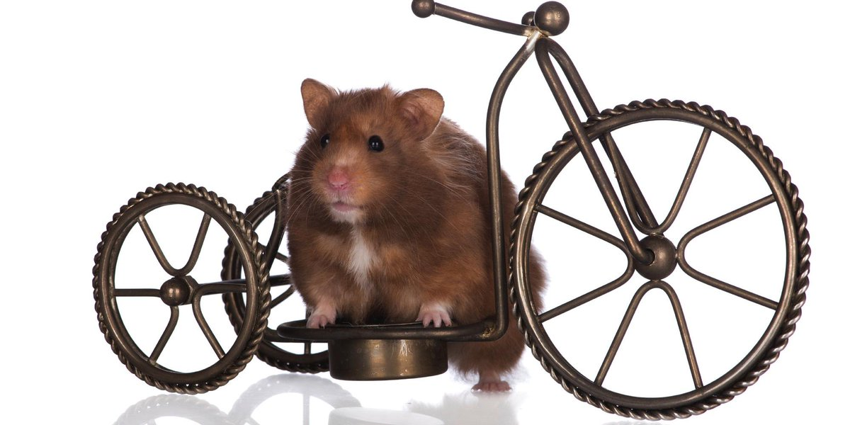 Introducing the brand new hamster #MTB series #AprilFools http://t.co/103tqftoqN