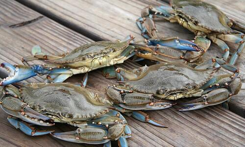 Rite of Spring! RT @MDNRPolice: Guess what day it is? Opening day of blue crab season! Can the Os be far behind? http://t.co/gwJQ1isr8D