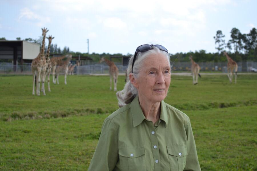 Yesterday Dr. Jane Goodall visited us on safari!Join us in wishing her a very Happy Birthday today! @JaneGoodallInst http://t.co/9JsKMrEKCe