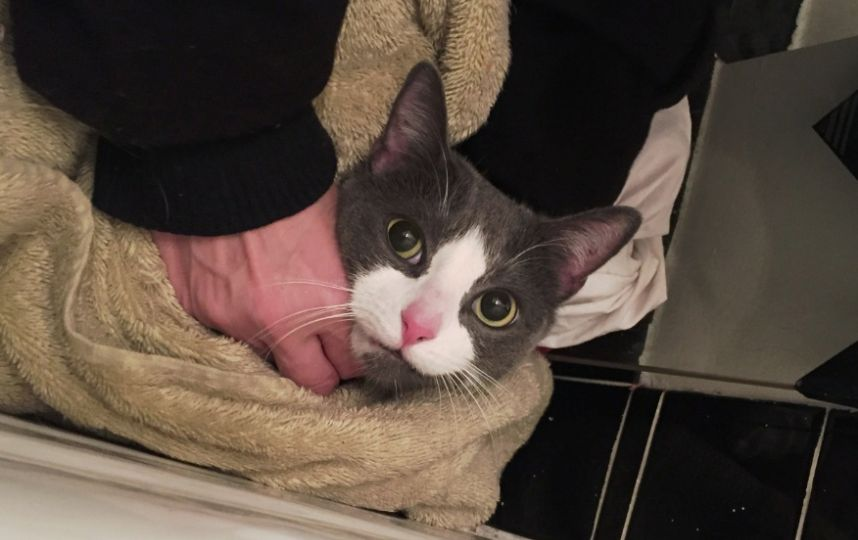 Sebastian & Kitty Cordelia have been reunited with their owner after the #EastVillage fire. http://t.co/VEVYWpcyzb http://t.co/OUuORX0c3n