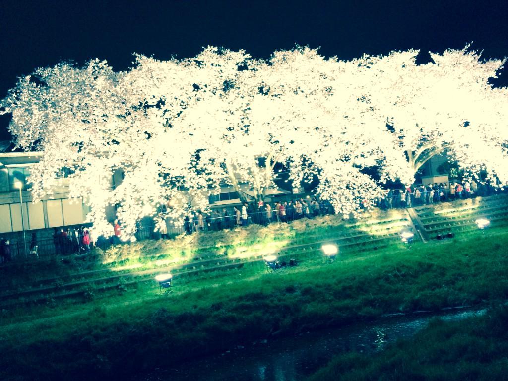 野川のライトアップ最高でしたね。調布市にいて良かったなと思う瞬間です。 http://t.co/vi2v5YOXPh